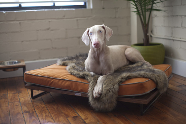 Awesome-Design-of-the-Drayton-Pet-Bed-Lounger-by-Architect-Pets-01-Grande-with-Hardwood-Floor