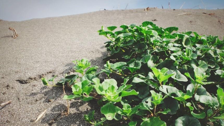 南房総最南端の砂浜「白浜」で犬の散歩