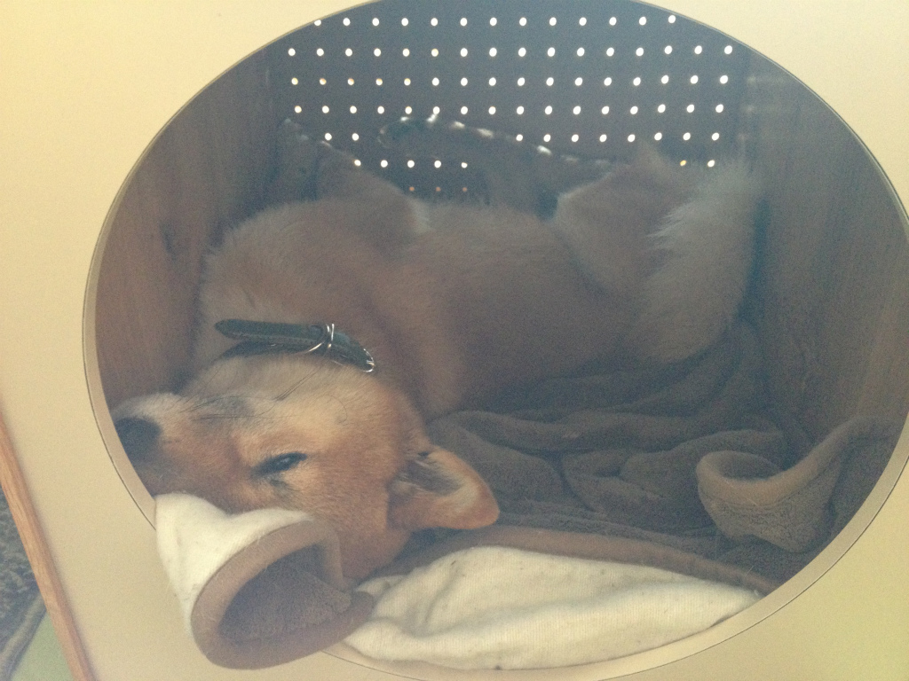 柴犬の犬小屋